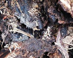 Appel 13 -  Marseille - Diagnostics termites